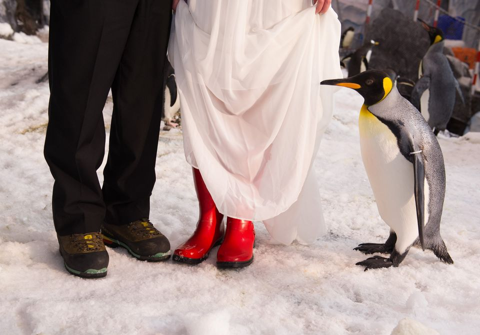Antarctica_Wedding_36